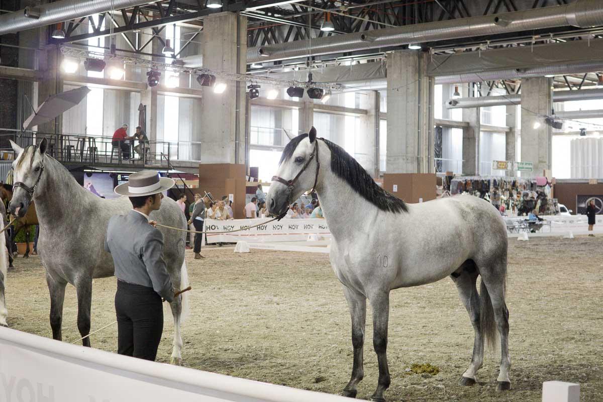 Ecuextre - Feria del caballo y el toro